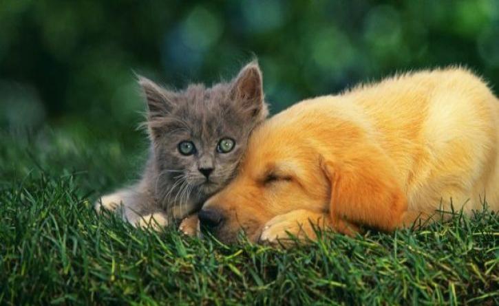Επικίνδυνοι όσο οι δολοφόνοι αυτοί που κακοποιούν ζώα - Ποιες ψυχικές ασθένειες κρύβονται από πίσω